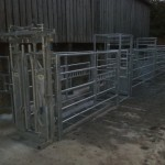 Cattle handling system with weighing scales.
