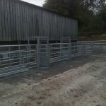 Cattle handling system with weighing scales