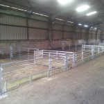 Sheep lambing pens with feed barrier fronts and walkthroughs