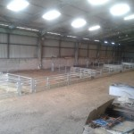 Sheep lambing pens with feed barrier fronts and walkthroughs.