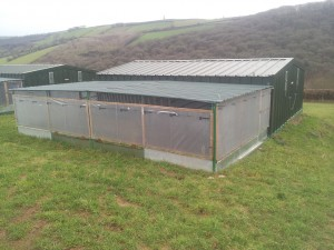 Pheasant rearing house and shelter pen on raised bed.